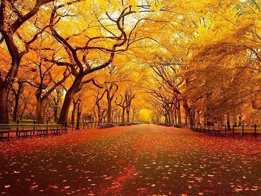 Con đường chiều thu đầy mộng mơ