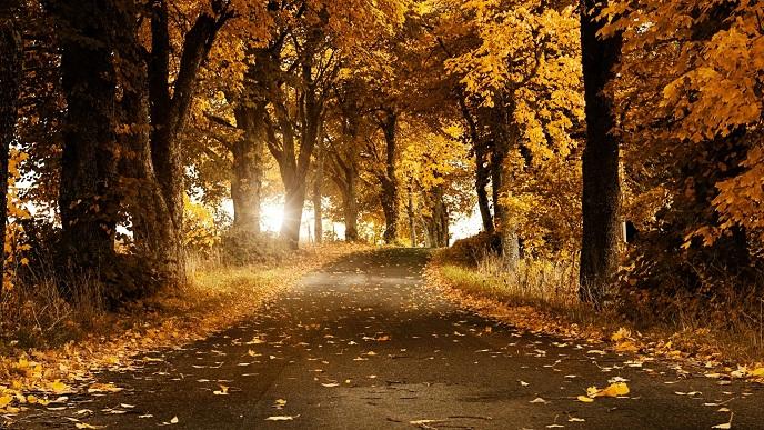 hình ảnh con đường mùa thu ngợp lá vàng