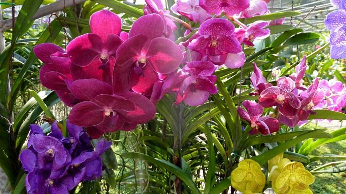 vườn hoa lan khoe sắc đẹp lộng lẫy