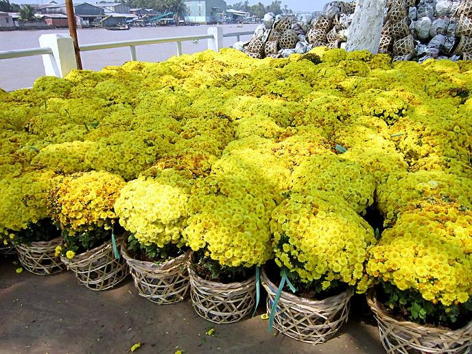 Những chậu hoa lan đã trở thành nét văn hóa truyền thống quen thuộc của người dân Việt