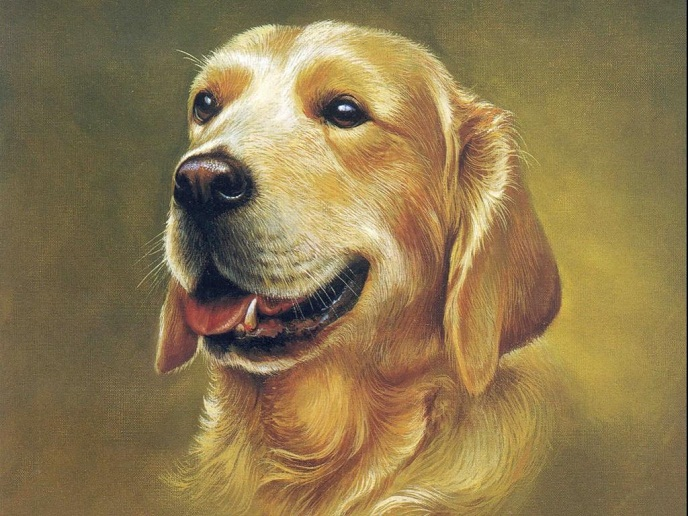 tranh thêu con chó - tnc
